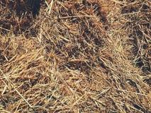 干燥干草纹理 免版税图库摄影