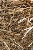 干燥干草背景 免版税库存图片