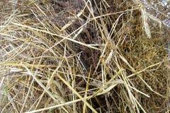 干燥干草 燕麦秸杆堆  免版税库存照片