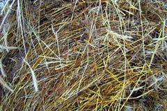 干燥干草 燕麦秸杆堆  库存照片