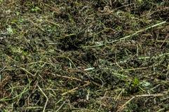 干燥干草 背景 图库摄影