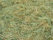 干燥干草 免版税库存图片