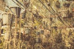 干燥庭院,死了从全球性变暖的植物作用 图库摄影