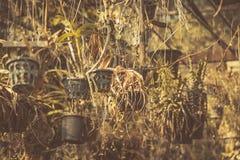 干燥庭院,死了从全球性变暖的植物作用 免版税库存照片
