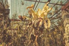 干燥庭院,死了从全球性变暖的植物作用 免版税库存图片