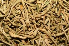 干燥忍冬属植物 免版税库存照片