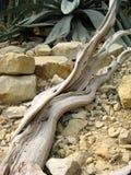 干燥木头 免版税库存照片