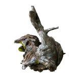 干燥木材 免版税库存图片