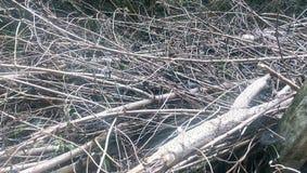 干燥木枝杈在后院 免版税库存图片