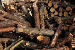 干燥木柴 免版税库存照片
