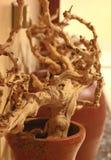干燥木头 图库摄影