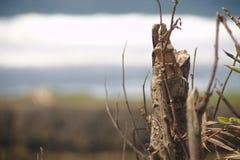 干燥木头 免版税图库摄影