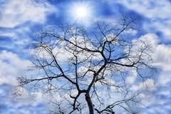 干燥本质结构树 免版税库存照片