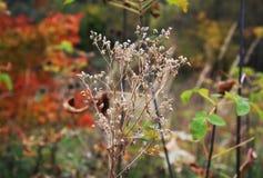 干燥杂草在晚秋天 库存图片