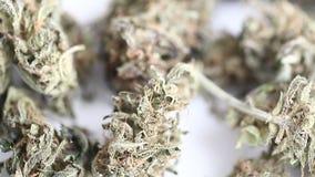 干燥杂草 漂白亚麻纤维医疗大麻大麻cbd的产品 股票视频