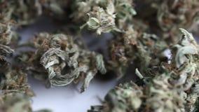 干燥杂草 漂白亚麻纤维医疗大麻大麻cbd的产品 股票录像