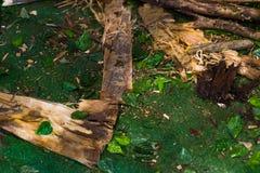 干燥杉木分支和蕨在森林背景中 图库摄影