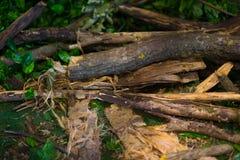干燥杉木分支和蕨在森林背景中 库存照片