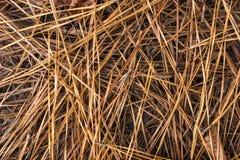 干燥杉木针背景 免版税库存图片