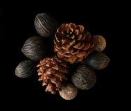 干燥杉木锥体 免版税库存照片