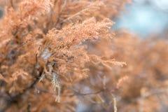 干燥杉木,黄色和紫罗兰色野花 r 库存照片