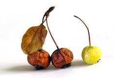 干燥果子皱褶 免版税图库摄影