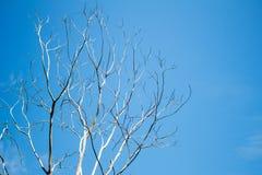 干燥枝杈和天空蔚蓝 库存图片