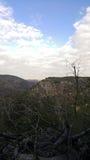 干燥枝杈和树, Carmel山作为背景,天空,以色列 库存图片