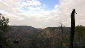 干燥枝杈和树, Carmel山作为背景,天空,以色列 免版税库存图片