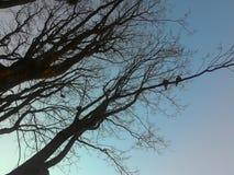 干燥枝杈 库存照片