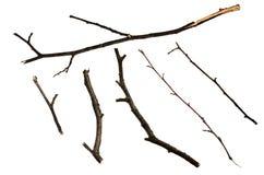 干燥枝杈 库存图片