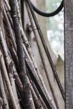干燥枝杈 图库摄影