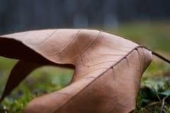 干燥枫叶在公园秋天早晨 免版税库存照片