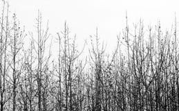 干燥柚木木材 免版税库存照片