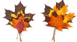 干燥标本集叶子 免版税库存图片