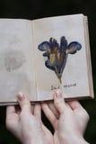 干燥标本集植物在干燥标本集书女孩的手上 免版税库存图片