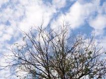 干燥树分支反对蓝天的与白色云彩 在秋天季节的下落的叶子 免版税库存照片