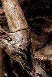 干燥树切口 库存图片