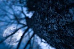 干燥树剪影与夜空和满月的 平静 库存图片