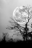 干燥树剪影反对夜空和明亮的月亮的 投反对票 免版税图库摄影