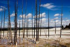 干燥树和多云天空在黄石国家公园,美国 免版税库存图片