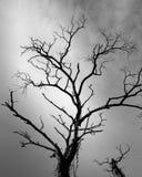 干燥树和多云 免版税库存图片