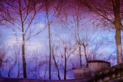 干燥树和天空的美术的反射 库存图片
