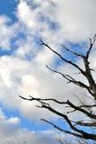 干燥树和天空 免版税库存图片