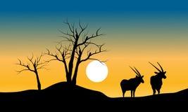 干燥树和羚羊剪影  免版税库存图片