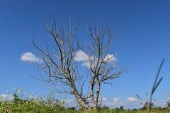 干燥树四季不断和蓝天 免版税库存图片