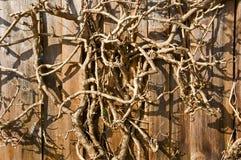 干燥树枝背景特写镜头。水平。 免版税库存照片