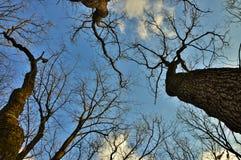 干燥树梢 库存照片
