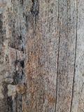 干燥树皮纹理背景 免版税库存图片