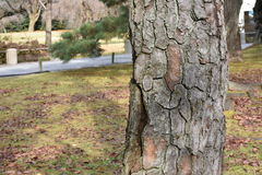 干燥树皮肤在秋天 免版税库存图片